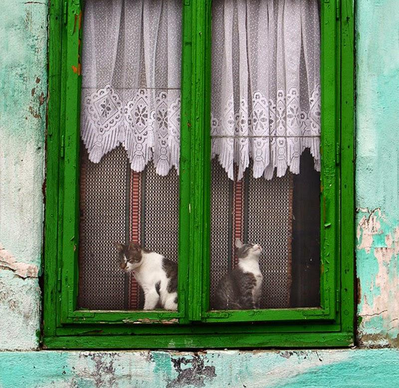 melancólicos gatos