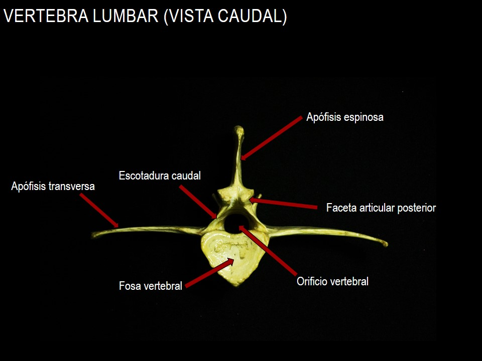 Anatomía Veterinaria Grupo 10