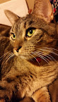 Cat #2: