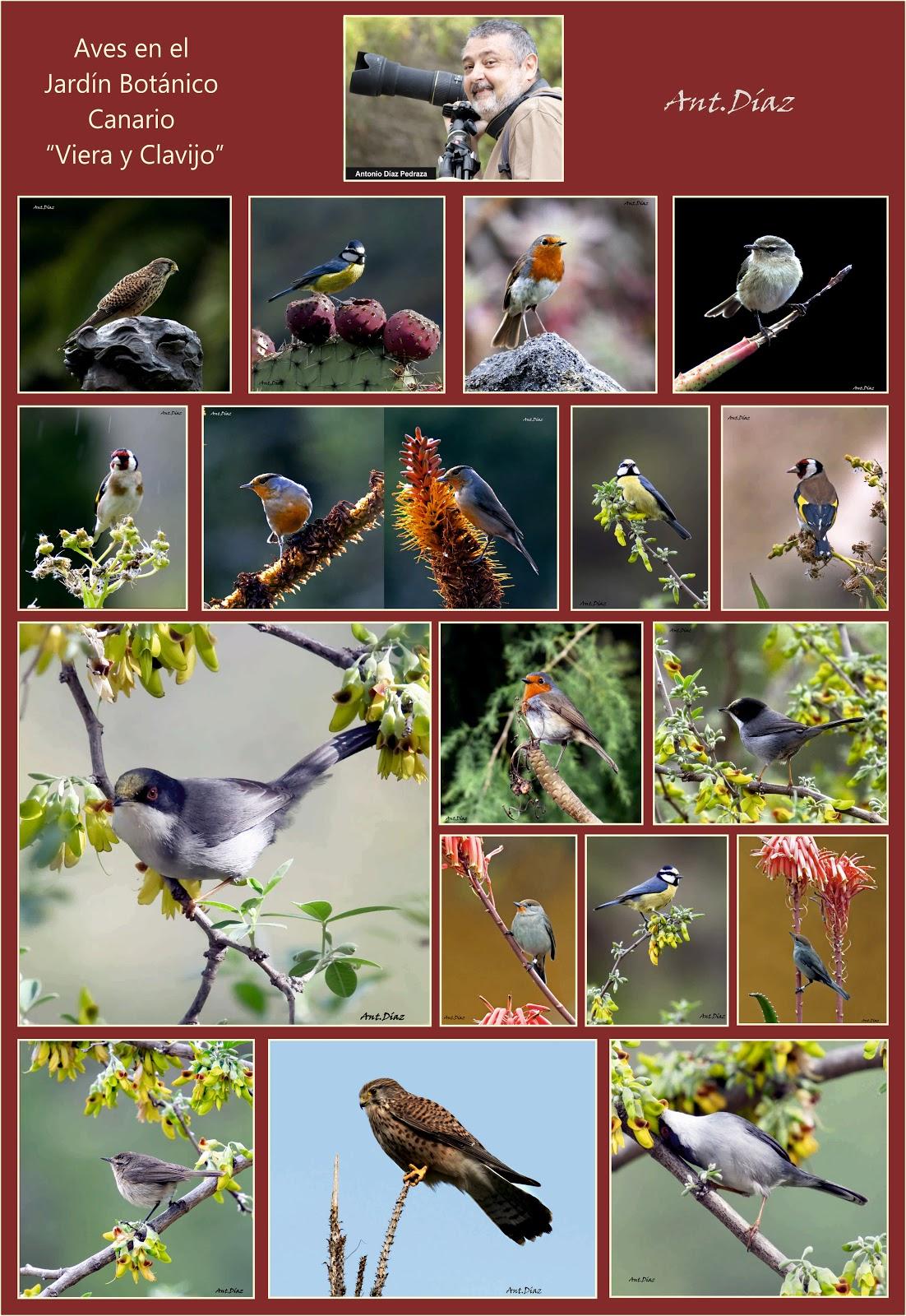 Exposici n fotogr fica aves en el jard n bot nico for Jardin botanico viera y clavijo