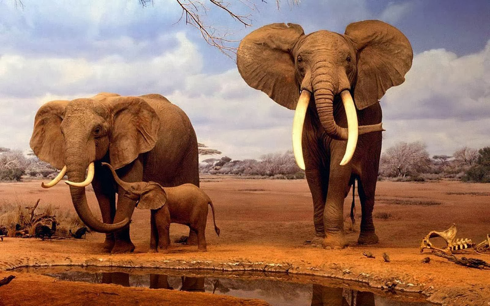AFRICAN ELEPHANTS HD WALLPAPERS
