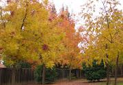 Fall's Foliage Finale