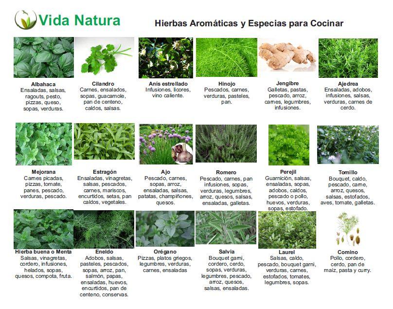 Tragaldabas educado hiervas arom ticas del mediterr neo for Plantas aromaticas para cocinar