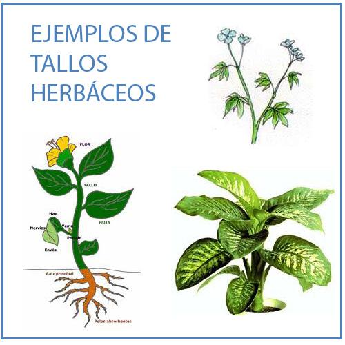 Las plantas para los niños de 4º de Primaria