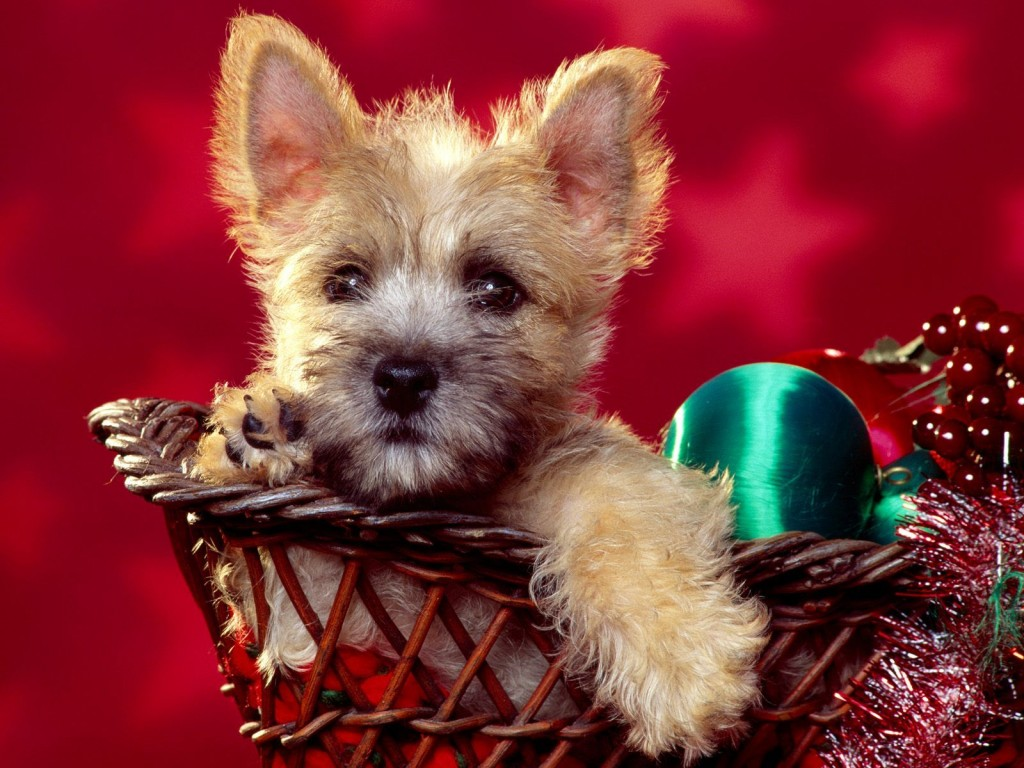 Funny image collection funny christmas dog photos and for Christmas pictures of baby animals