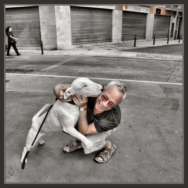 LLORET DE MAR-PERROS-CARIÑO-BRUTUS-LABRADOR-FOTOS-SINTONIAS-PINTOR-ERNEST DESCALS-