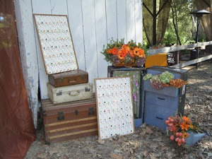 Steamer trunk/luggage as backdrop for guest cards