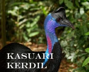 informasi burung kasuari