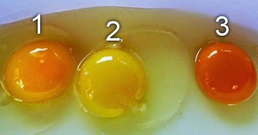 Warna Kuning Telur