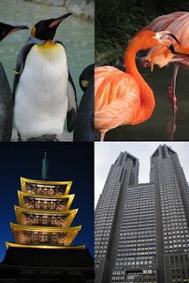 Viagens, Dicas, Relato, Japão, Tokyo, Japan, Ueno, Zoo, Sensoji, Asakusa, Prefeitura