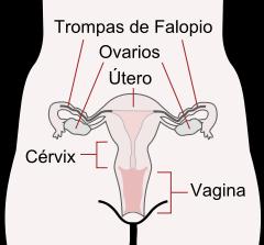 Imagen del Aparato Reproductor Femenino (Parte interna), señalando partes