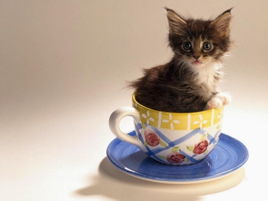 """<img src=""""http://1.bp.blogspot.com/-EoStqfOpHhs/UtrgNBkvZ-I/AAAAAAAAI44/KXKp5goLzT4/s1600/kitten.jpeg"""" alt=""""cute kitten"""" />"""