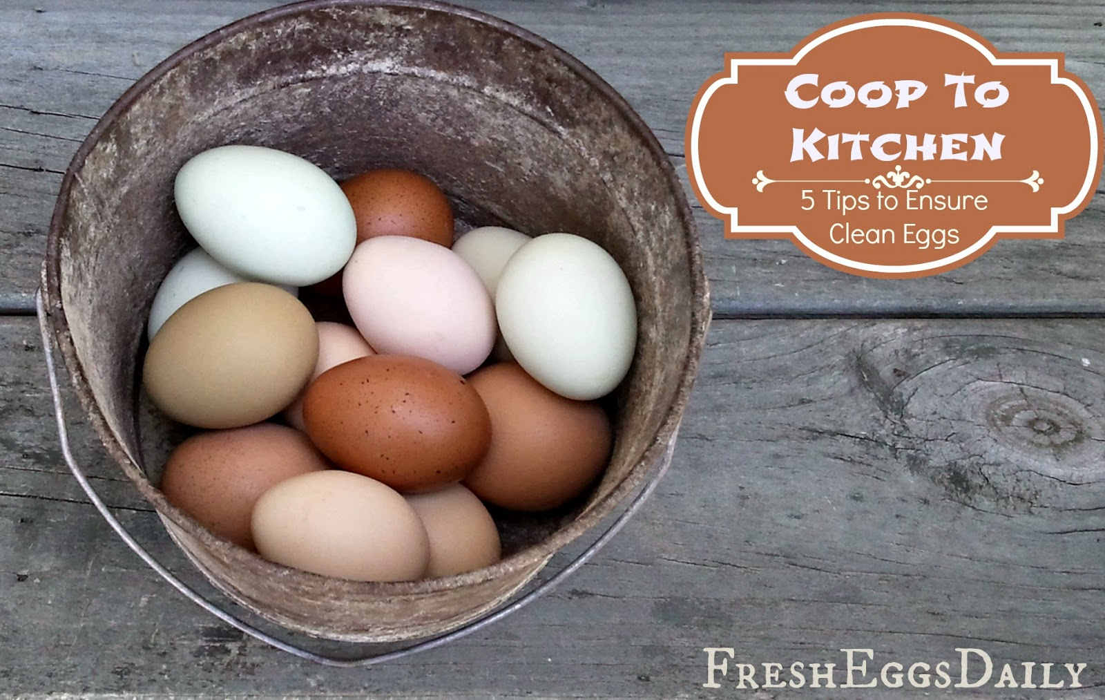 coop to kitchen 5 tips to ensure clean eggs from your backyard