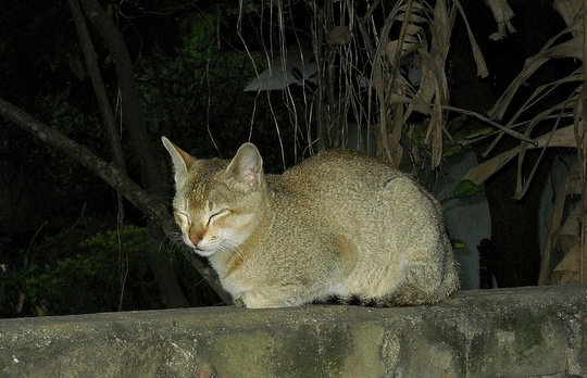 Cat from Guwahati, India