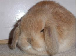 transtornos alimenticios en los conejos