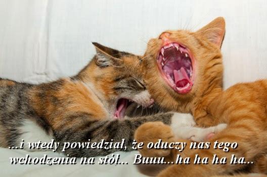 Buuu... ha ha ha ha...