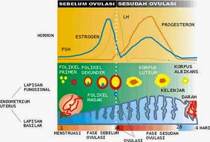 http://sehatmasakini.blogspot.com/2014/09/dampak-menstruasi-pada-konsentrasi.html