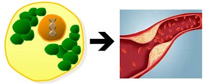 Pembentukan AGE protein