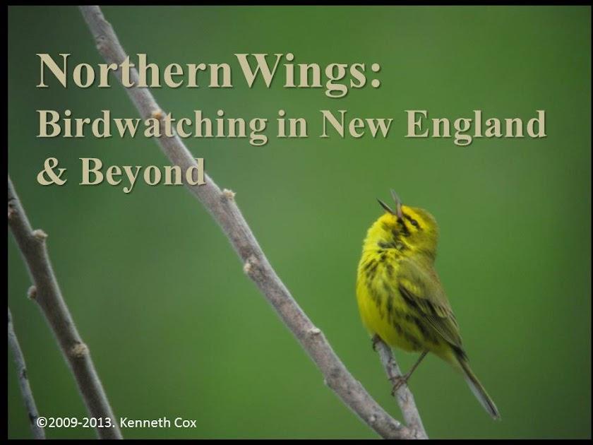NorthernWings