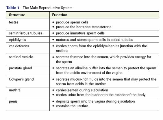 Sec 2 Science E Portfolio Reproduction In Man