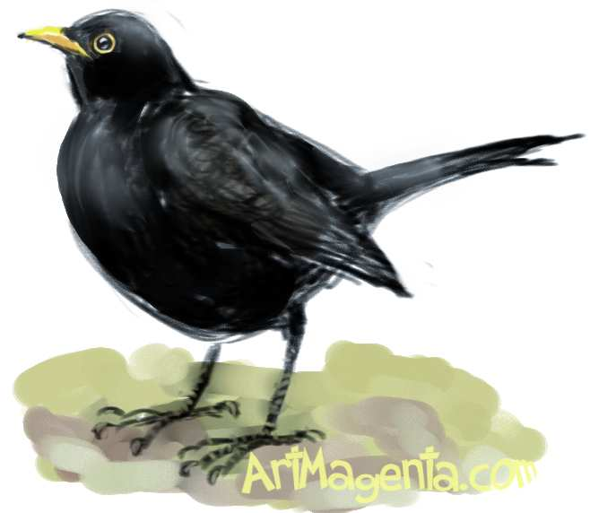 blackbirds drawing - photo #17