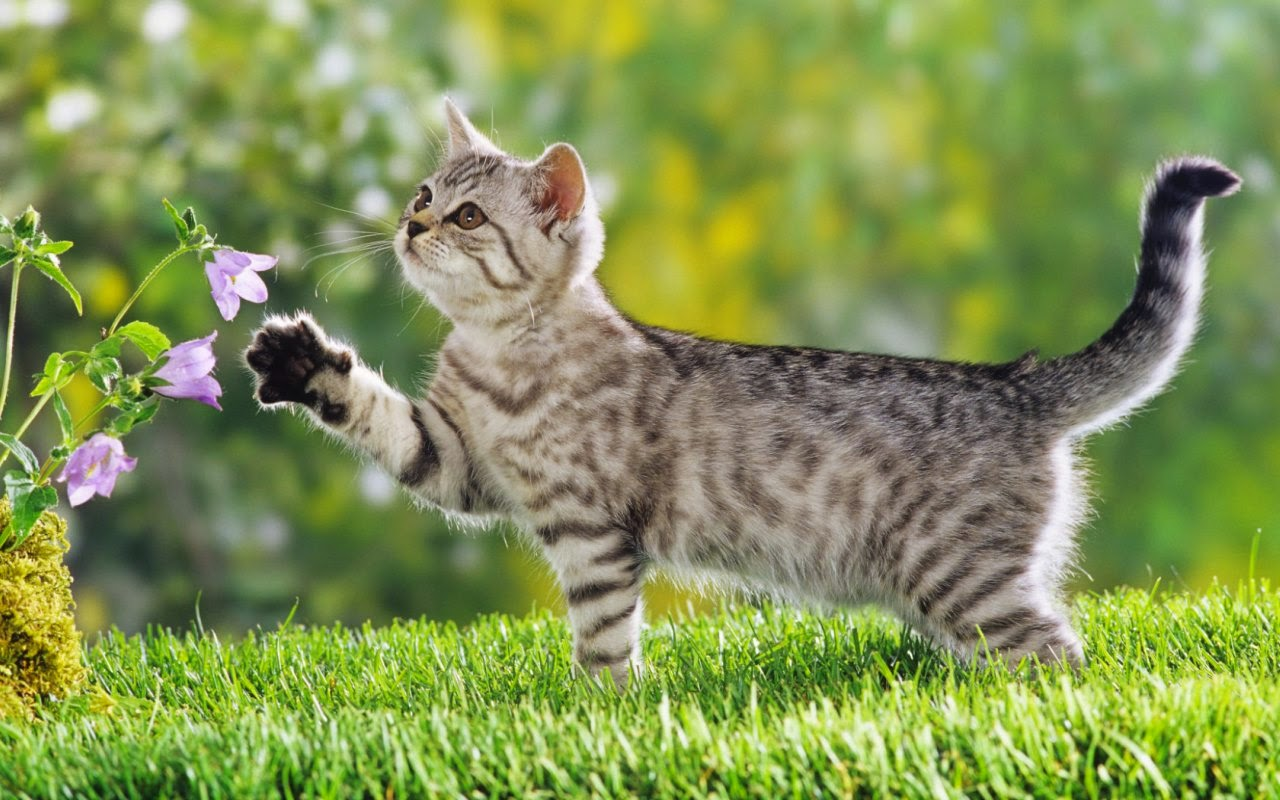 Cute Cat Wallpapers | tips and information resources