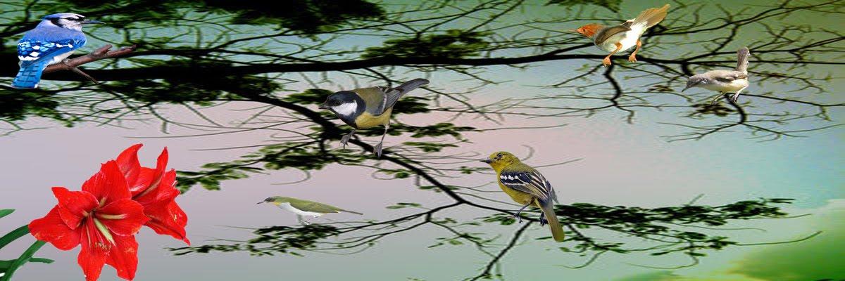 macam-macam perawatan burung