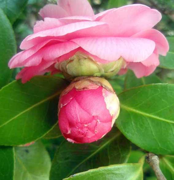 Fotos de flores naturales Digitalfotored - Fotos De Flores Naturales Y Sus Nombres
