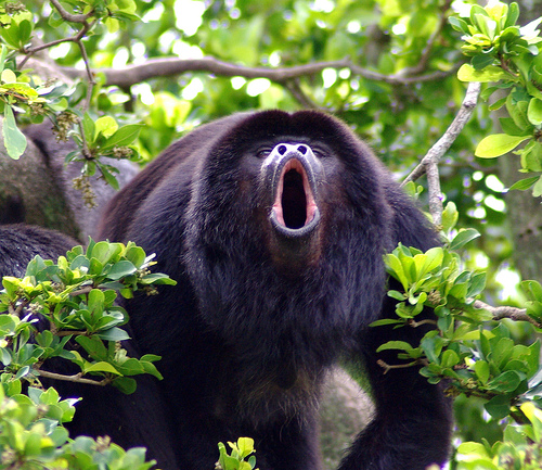 Monkey Island Affe