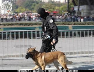 K911/17: LES MAITRES CHIENS DANS LA POLICE