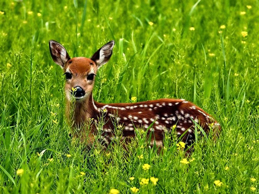Deer Makeup Tutorial Halloween 2013 From Head To Toe
