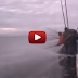 This is how tuna fishing in China look like