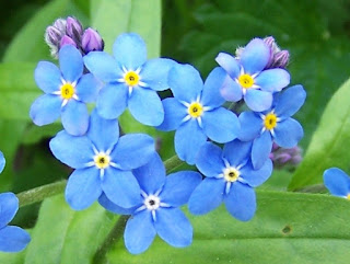 lesson on being kind and compassionate toward yourself - uchtdorf forget-me-nots