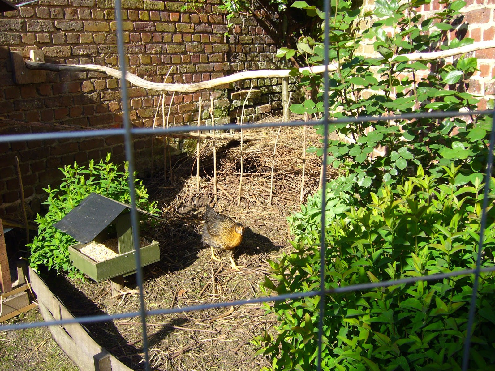 Jardin potager comestible partager mai 2015 for Jardin potager 2015