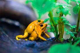 Todo sobre las ranas for Caracol de jardin de que se alimenta