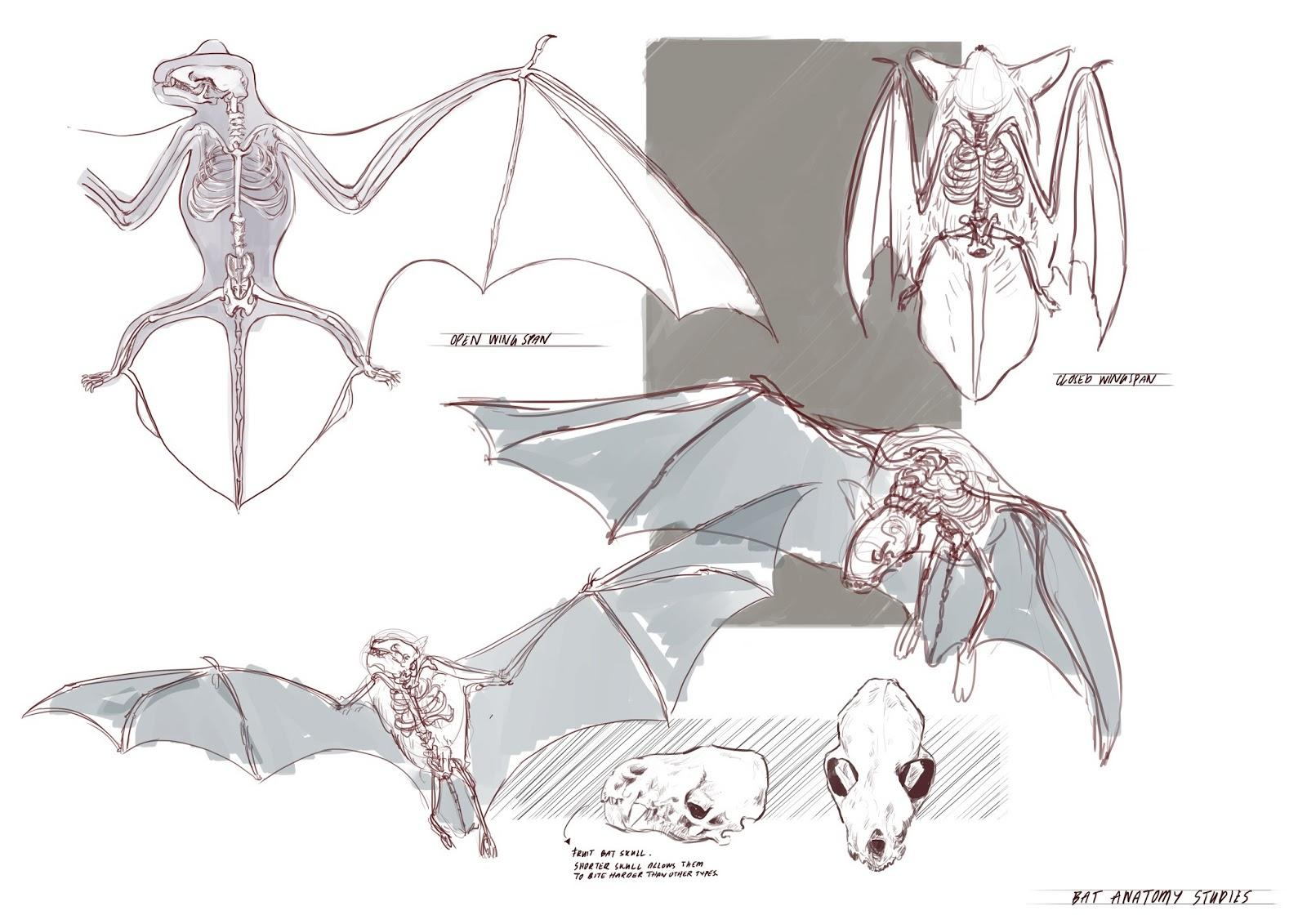 Anatomy of them bats! | Digi Illutration II