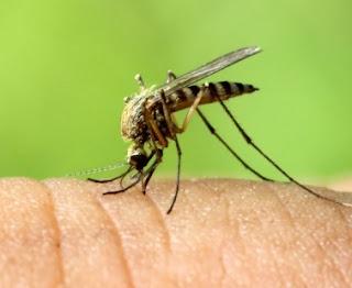 Kamar Anda Banyak Nyamuk? Usir Dengan Bahan-Bahan Alami Berikut