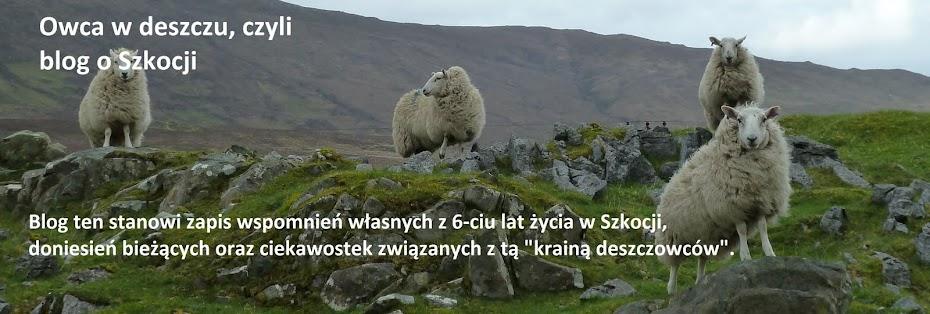 Owca w deszczu, czyli blog o Szkocji