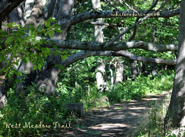 West Meadow Trail at Gilsland Farm Audubon