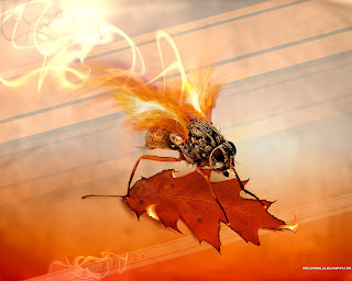 Fire Fly HD Wallpaper