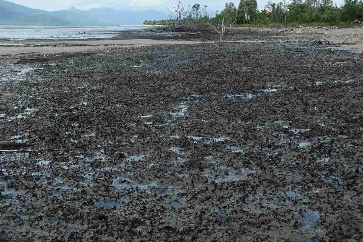 Mangrove swamp destroyed by Cyclone Yasi