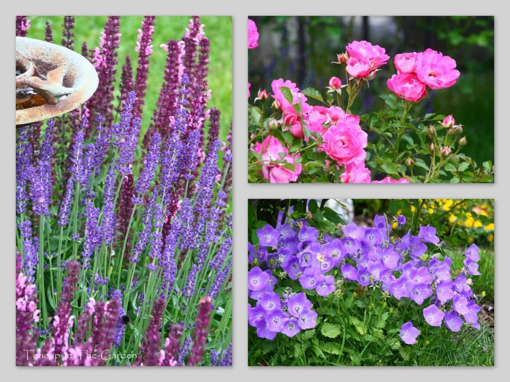 salbei lavendel teacup in the garden. Black Bedroom Furniture Sets. Home Design Ideas