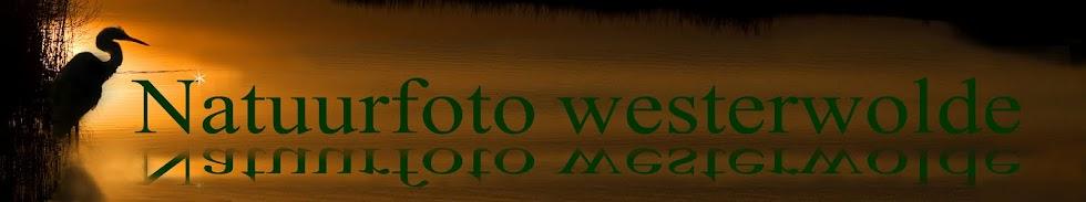 Natuurfoto Westerwolde