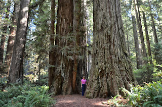 Liz standing between the giant trees in the Redwood forest