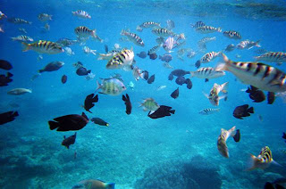 beautiful fish in bali, diving in bali, scuba diving in bali