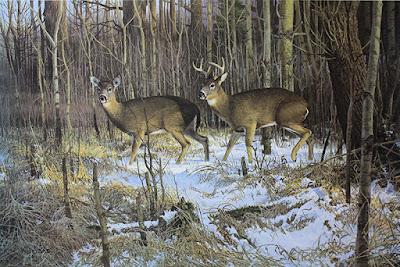 Wildlife Art - Its History and Development