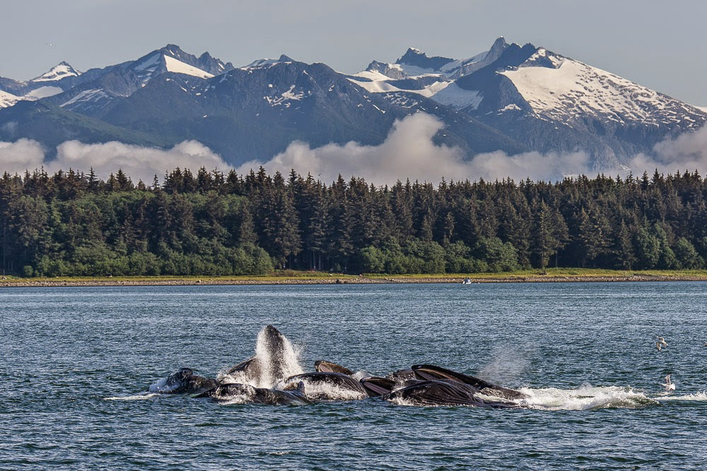 http://www.rudolf-hug.ch/content/fotogalerie/Travel/Alaska%202014%20Whale%20watching/index.html