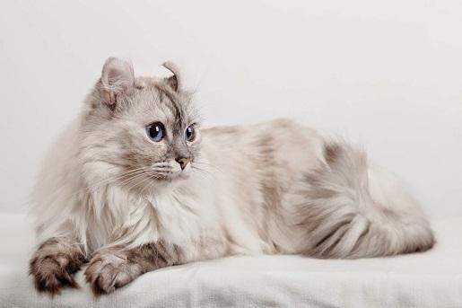 Jak odzwyczaić kota od spania w sypilani?