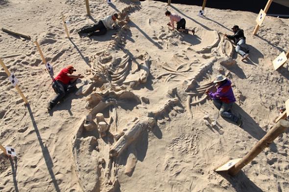 Fósseis de baleias: Dilúvio