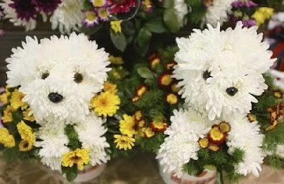 two cute dogs made from chrysanthemums and surrounded by daisies